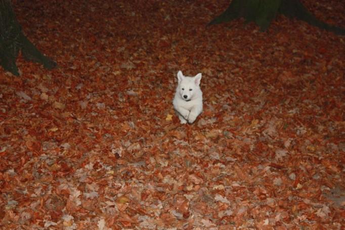 Welpe im Wald umgeben von Herbstlaub