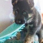 Hunde-Verhaltenslehrgang