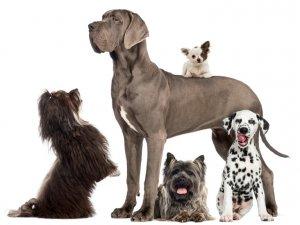 Hundeerziehung - Soziales Verhalten - Foto: istockphoto/Global P