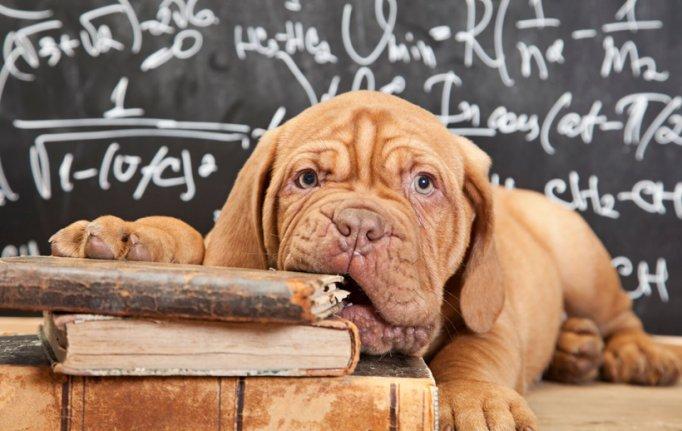 Verhaltenslehrgang Hunde